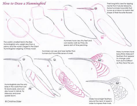 sketchbook tutor bird sketching tutorials