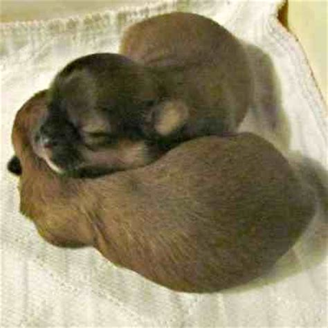 how much do 8 week puppies sleep sleeping puppies help with nightime sleeplessness