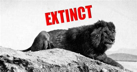 last 5 new year animals every single animal that became extinct in the last 100 years