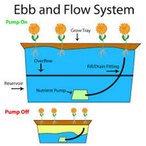 ebb  flow system tanaman hidroponik