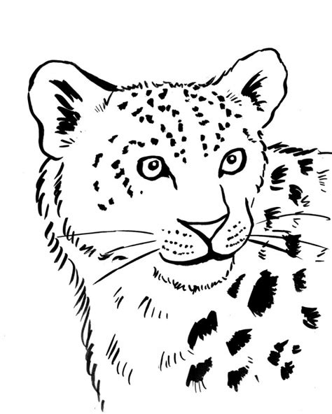 snow leopard coloring page samantha bell art blocks
