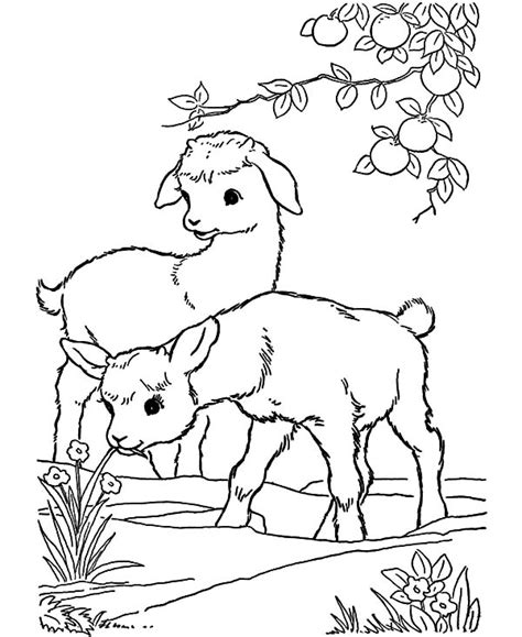 skinny goat coloring pages color luna