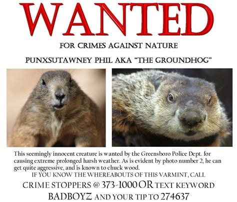 groundhog day jokes riddles greensboro department looking for a known criminal