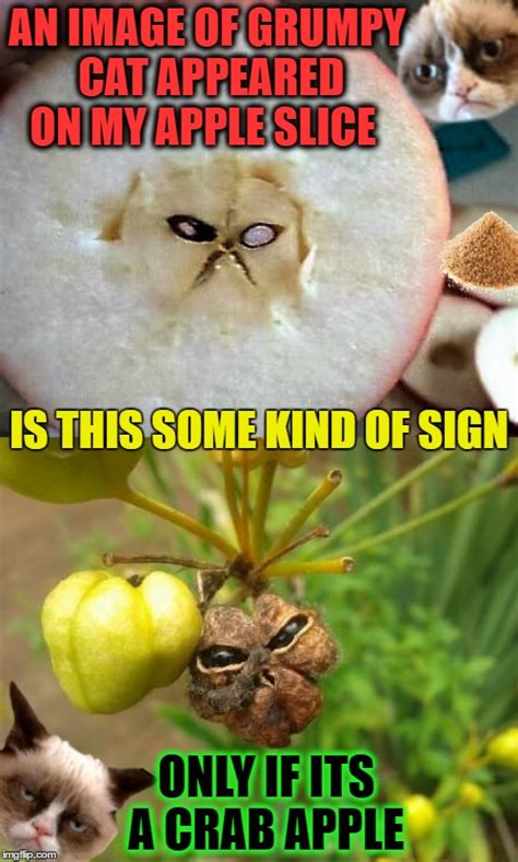 Fruit Memes - grumpy cat is the fruit cat messiah imgflip