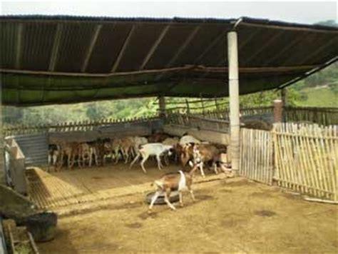 las fotos m 225 s de corrales en instagram instalaciones ovicaprinas un corral para su reba 241 o foros