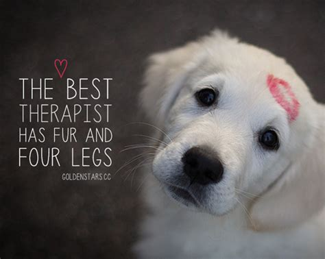 sayings about dogs 28 quotes spartadog