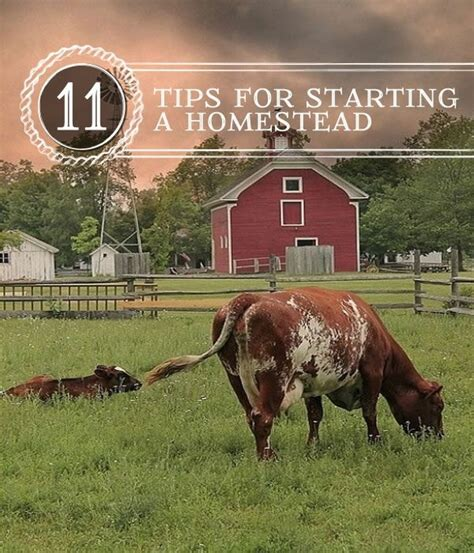 024 tips for conquering your 11 tips for starting a homestead learn how to start your
