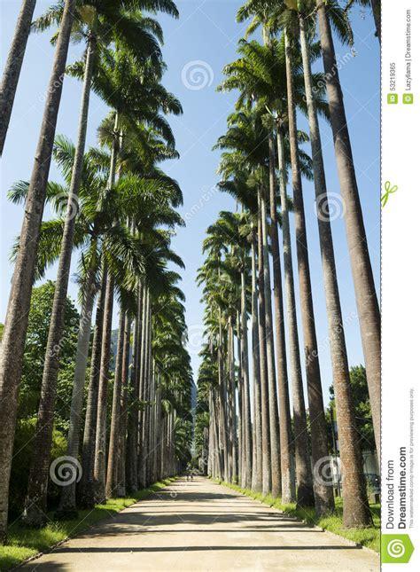 De Brazil Palm Gardens by Avenue Of Royal Palms Botanic Garden Stock Image