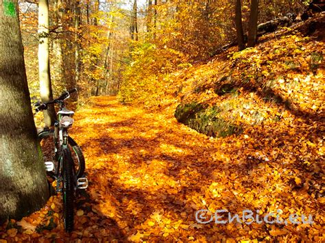 imagenes de otoño primavera verano primavera verano oto 241 o invierno y otra vez primavera
