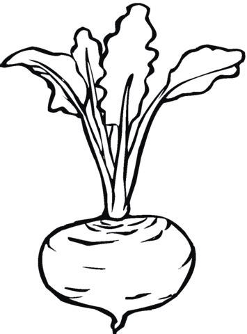 Kolorowanka Burak - warzywo uprawne | Kolorowanki dla