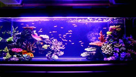 Tumbuhan Coral Artifisial Dekorasi Aquarium artificial coral reefs for aquariums aquarium design ideas