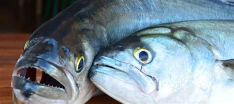 cucinare il pesce serra cucinare il pesce serra con il sale grosso di cervia