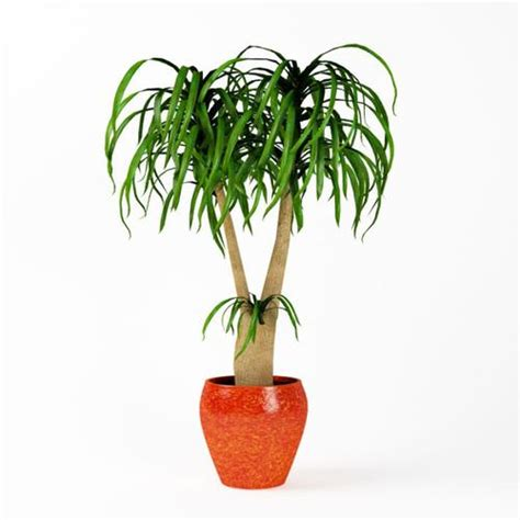 in door plants pot three four plants argements video plant indoor potted plant 3d model cgtrader com