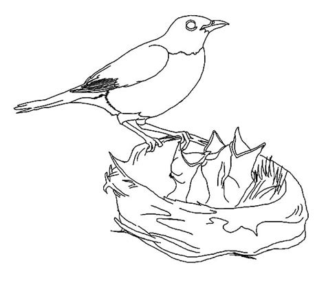 free coloring pages of baby birds hungry baby bird in bird nest coloring pages hungry baby
