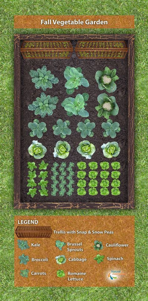 best fall garden vegetables 25 best ideas about fall vegetable gardening on
