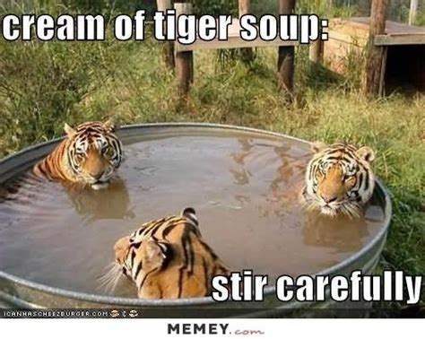 Funny Tiger Memes - arrested for fighting with pregnant wife funny tiger meme
