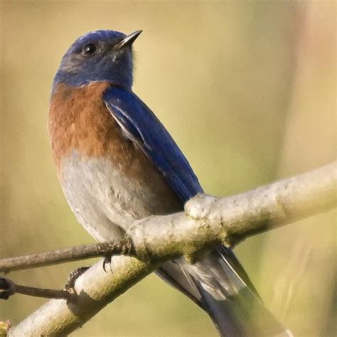 bluebird conservation kids growing strong