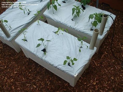 specialty gardening new earthbox several