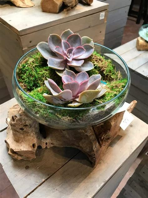 beautiful and creative ways to display succulent plants montana happy
