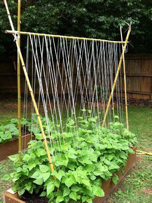 trellis for peas sugarsnap pea trellis sugar snap peas 2 ft by 5 garden