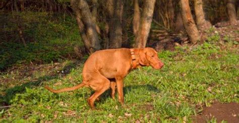 Allontanare Cani Che Fanno Cacca by Park Spark Project Come Trasformare La Pup 249 Dei Cani In