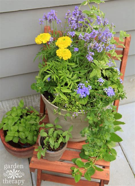 plant a mosquito repelling container garden to protect entertaining spaces garden therapy