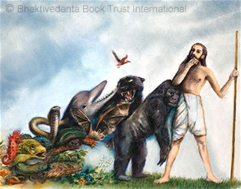 imagenes animal espiritual vida humana es krishna com