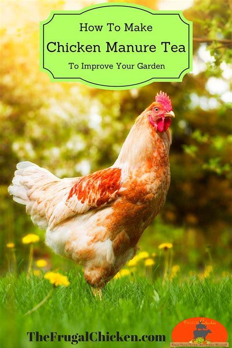 Use Chicken Manure Tea In Your Garden Like Your Chicken Manure Vegetable Garden