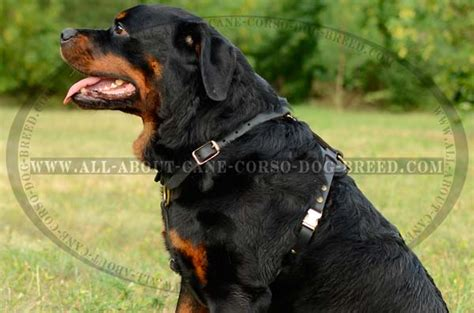 rottweiler bite strength bite chart breeds picture