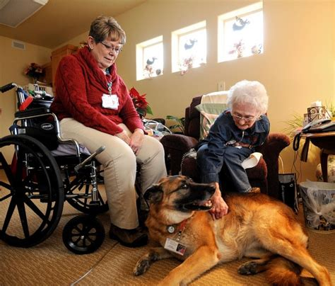 comfort hospice chicago canine comfort local hospice brings pet companions for