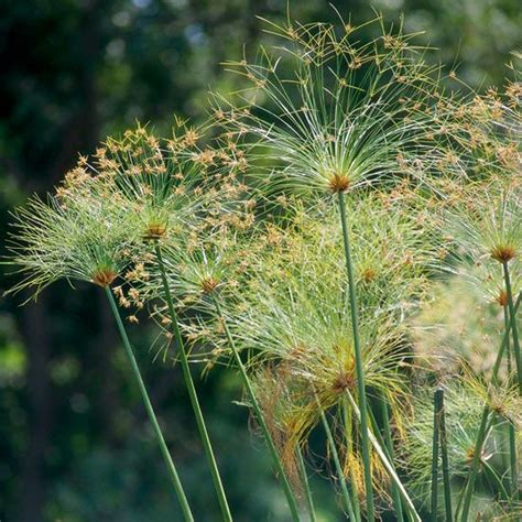 weeds in the backyard 4 feet tall 94 best images about flowers in my garden on pinterest