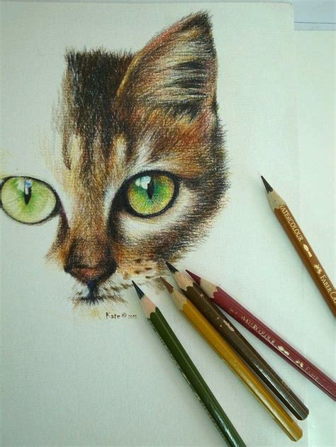 Cat Pencil colored pencil drawings of cats images