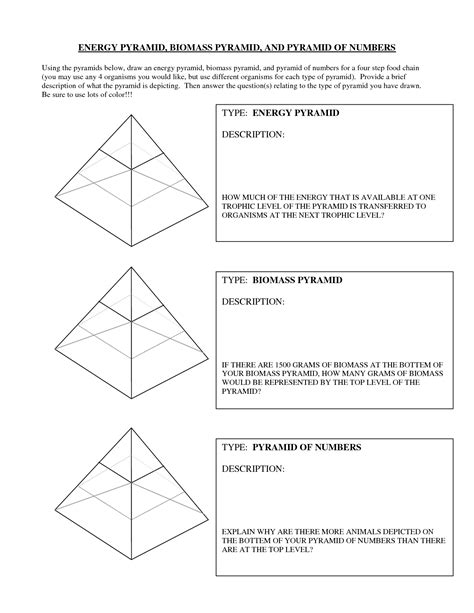 Ecological Pyramids Worksheet Answers by 13 Best Images Of Ecological Pyramids Worksheet Answer Key