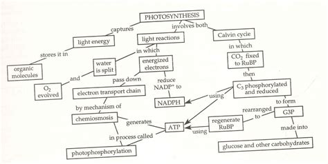 photosynthesis flowchart flowchart of photosynthesis 28 images flowchart