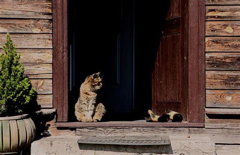 katzen haus katzenklappe selber einbauen so geht es baumagazin