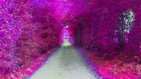 imagenes tumblr moradas fondos de pantalla de flores moradas tama 241 o 800x600