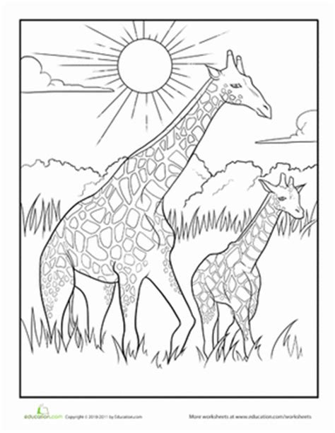 giraffe habitat coloring pages color the mother and baby giraffe worksheet education com
