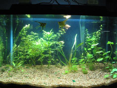 planted  gallon tank aquascaping aquatic plant central
