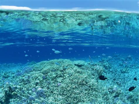 Oceanos Boad oceano pac 237 fico surcando los mares