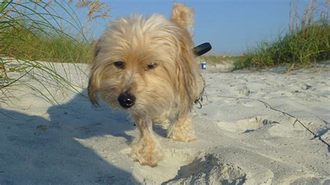 florida beaches that allow dogs would allow dogs on neptune 24 7