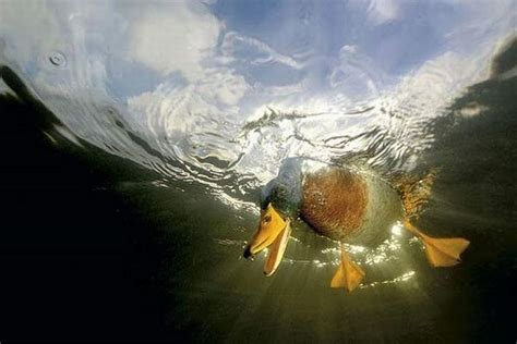 imagenes realmente asombrosas las tomas mas maravillosas del mundo taringa