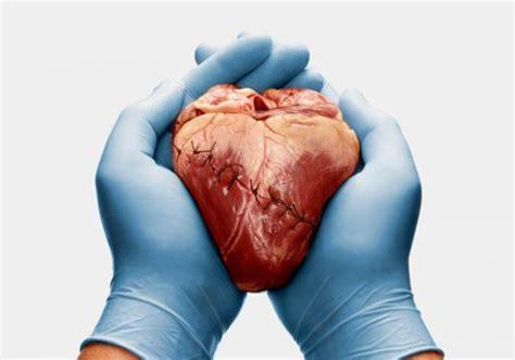 imagenes de corazones organo proyecto the living heart estudiar 225 problemas del coraz 243 n