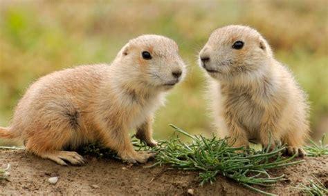 imagenes variadas de animales las mejores fotos de animales peque 209 os im 225 genes