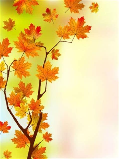 daun maple wallpaper maple yang indah daun latar belakang vektor vector latar