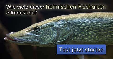 wie viele dieser heimischen fischarten erkennst du