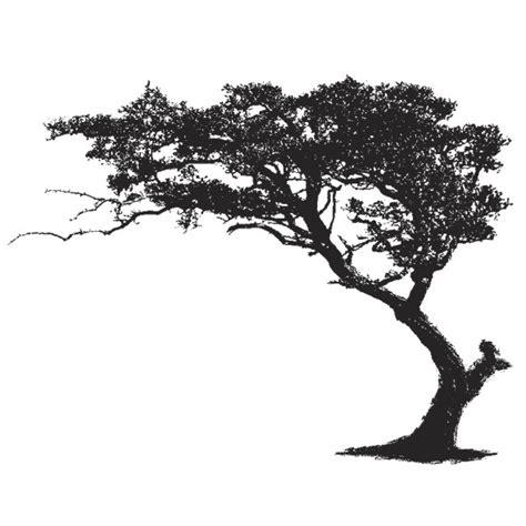 Pon Pon Baum 1240 by Pon Pon Baum Mediterrane Pflanzen Buchsbaum Pompon Buxus