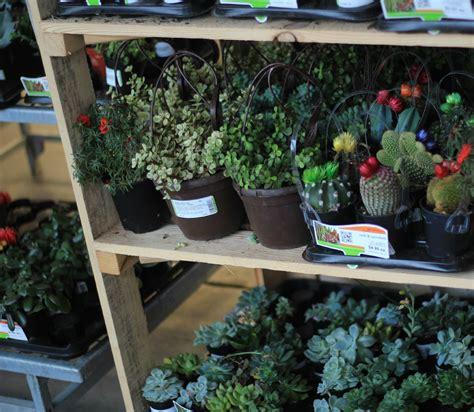 diy how to plant a succulent garden tutorial
