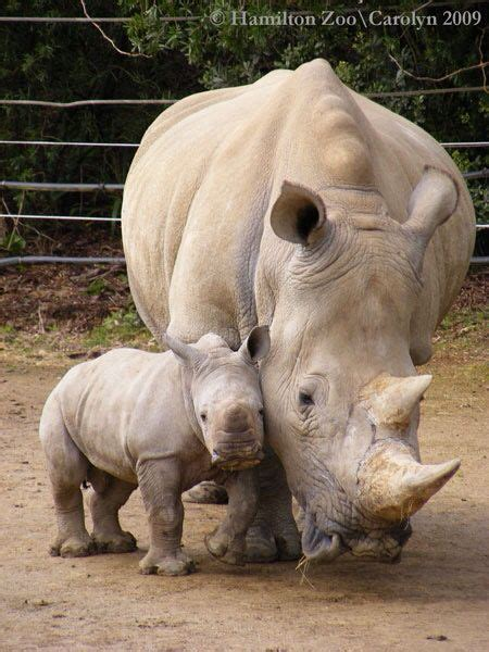 Animal World 19 Tshirtkaosraglananak Oceanseven 19 best horned animals in the world magnificent horns rhinos rhinoceros and animal