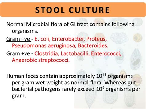 Types Of Stool Culture by Stool Examination