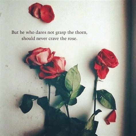 23 rose quotes rose poem and oscar wilde